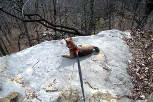 Loki checking out the view on a double black diamond trail